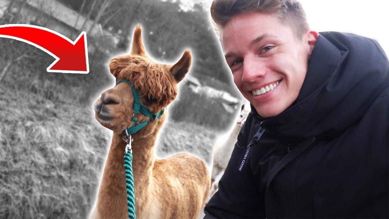 Luca wandert mit ALPAKAS - YouTube