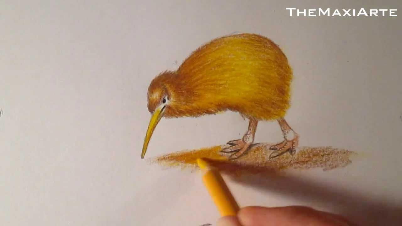 Dibujo De Un Kiwi Como Dibujar Aves Hd Youtube