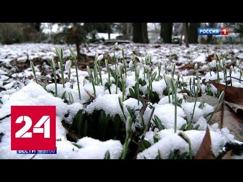 Подснежники в январе: что случилось с погодой - Россия 24