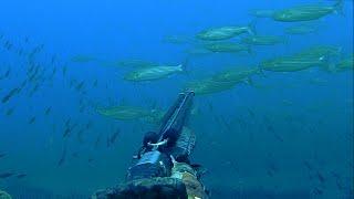 İri Kefal Avları-Big cefalos (mullets) hunting Spearfishing turkey, zıpkınla balık avı, zıpkın avı