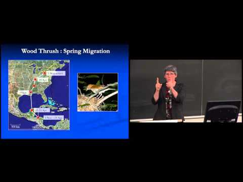 York Circle - Frequent Fliers: New Discoveries in Songbird Migration
