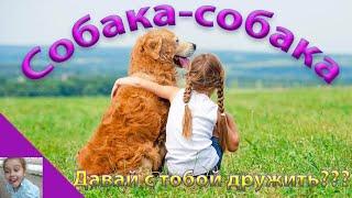 Собака собака, давай с тобой дружить?Смешные дети. Девочка и собака