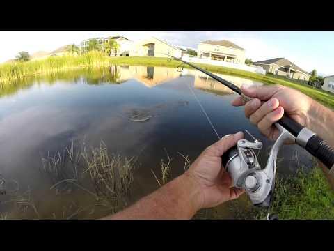 Backyard Pond Bass Fishing