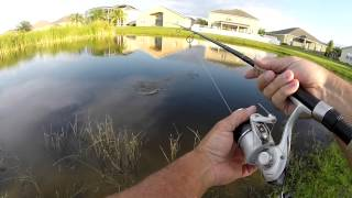 Backyard Pond Bass Fishing