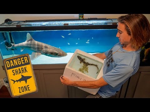 SAVING Pet SHARK Turns Into DANGEROUS Fish Transfer...