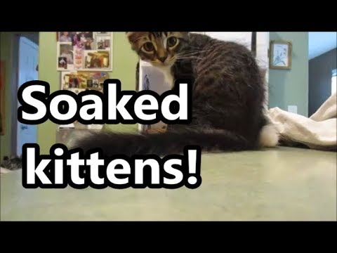 Soaked kittens 7.19.18 day1849
