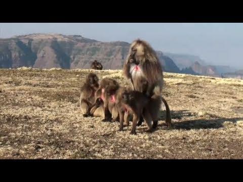 The Simien Mountains National Park (Ethiopia) thumbnail