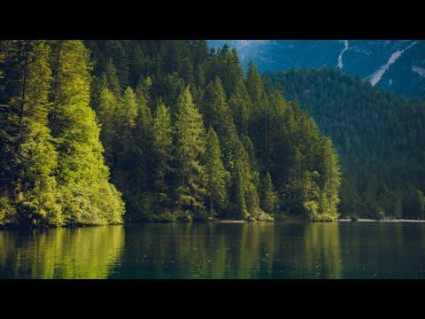 5 حزيران يونيو هو اليوم العالمي للبيئة ، فهل بات يعلم اغلب الناس حول العالم أهمية الحفاظ عليها ؟  - نشر قبل 4 ساعة