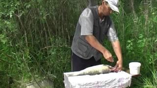 [Школа рыболова] - Жерех (часть 8)