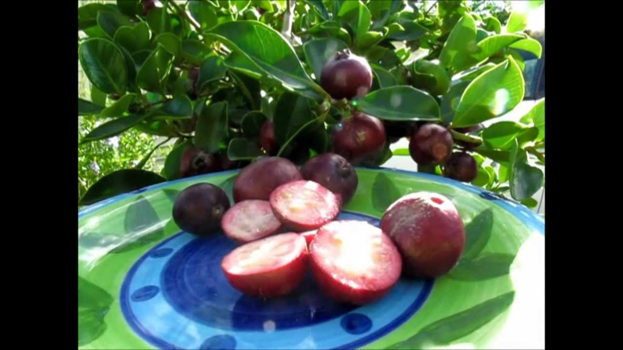 how to make guava seed oil