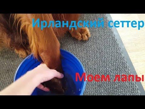 Вопрос: Чем дезинфицировать шерсть и лапы собаки от коронавируса после прогулки?