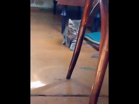 Коту надели резинки на живот