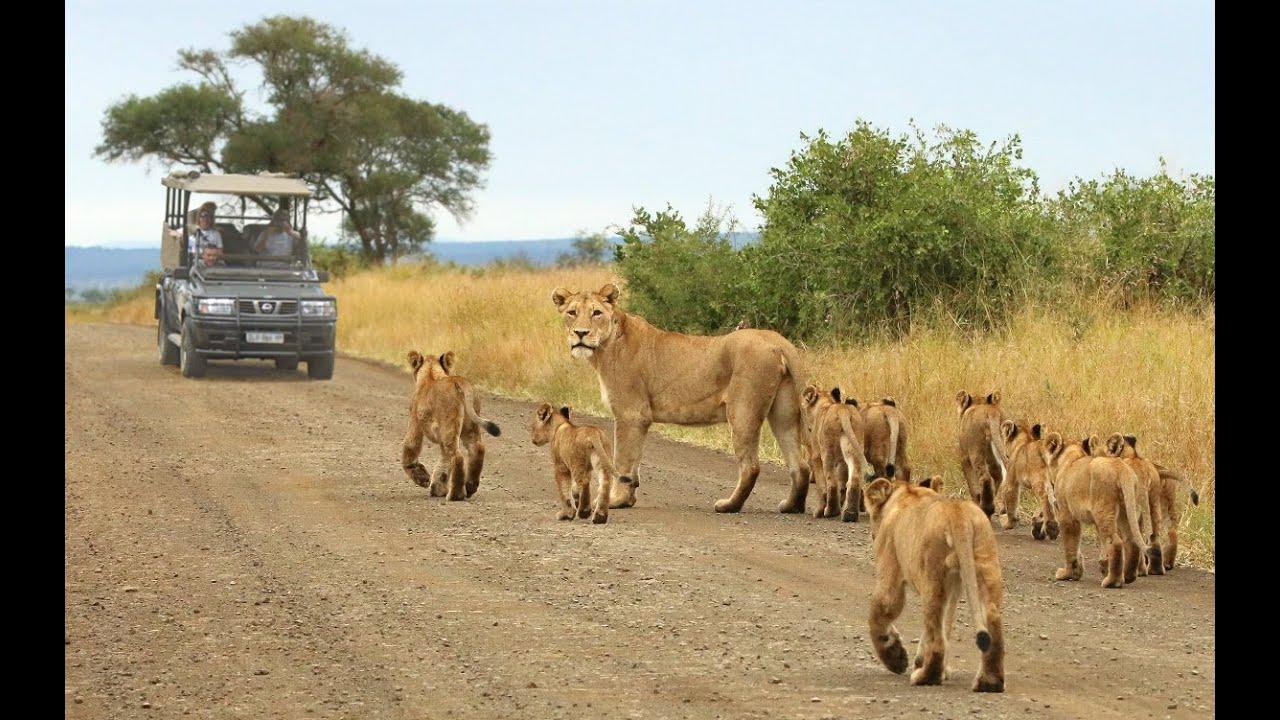 Image result for Kruger National Park, South Africa