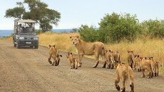 Kruger National Park safaris with Wild Wings Safaris