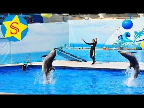 Дельфинарий Санкт-Петербурга Дельфины и морские котики шоу Delphinarium Dolphins And Fur Seals Show