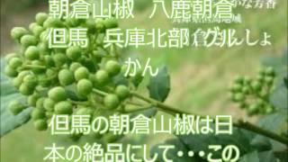 朝倉山椒 八鹿朝倉 但馬 兵庫北部 グルかん asakura-sansyo