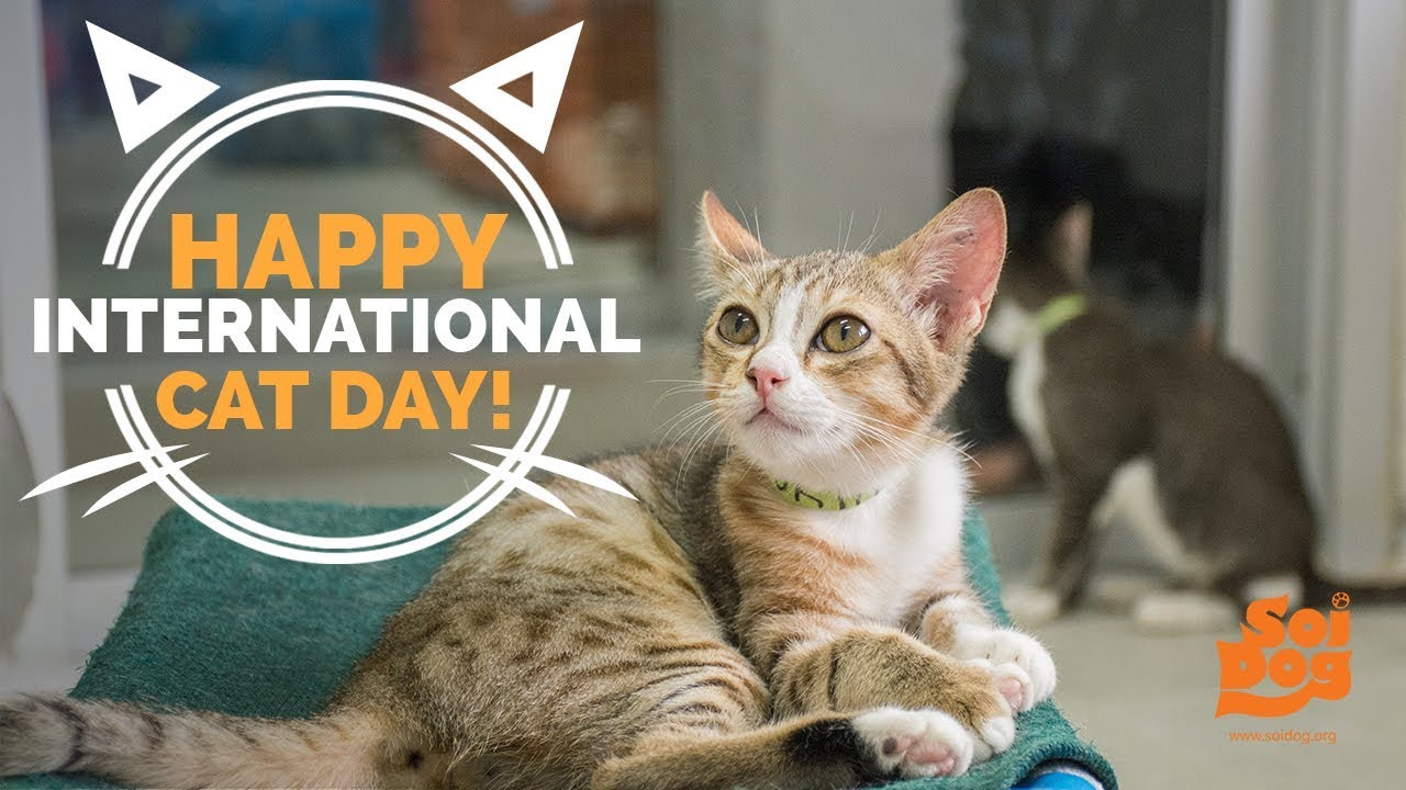 Ten Ways To Celebrate International Cat Day Tractive Blog