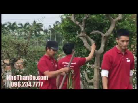 Thi công dự án cây xanh giai đoạn 3 biệt thự sân vườn tại Hóc Môn – TPHCM