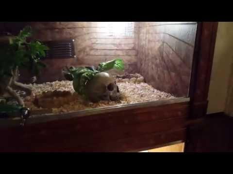 reptile enclosure glass vs wood vs plastic