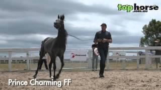 Top Horse TV - Future Farms Arabian Stallion Parade