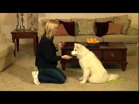 How to Train Your Dog to Shake Hands For Dummies