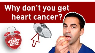 Why don't people get heart cancer? thumbnail