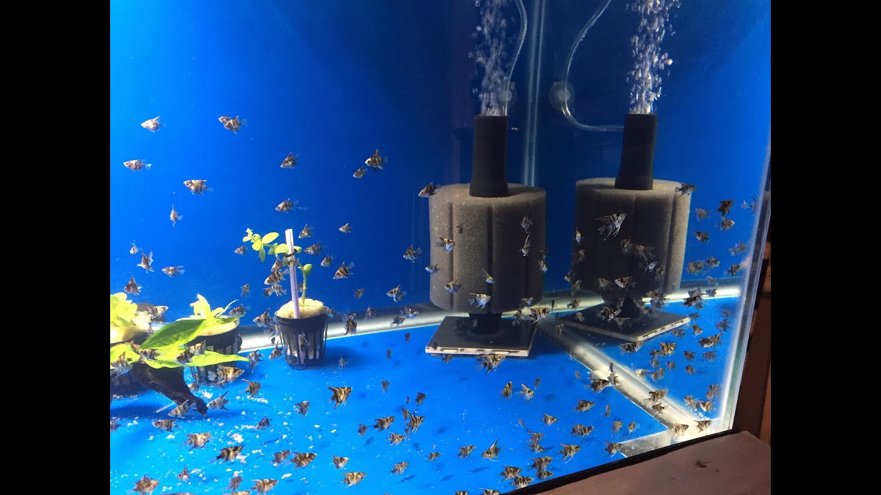 Diy sponge filter doovi for Fish tank filter homemade