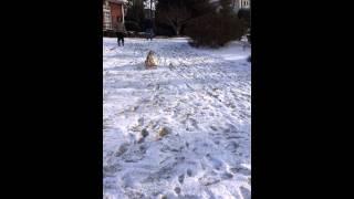 The Sledding Beagle!