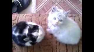 Котенок с разными глазами))))