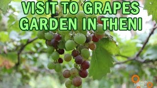 Grapes and Pomegranate Garden Visit in Theni