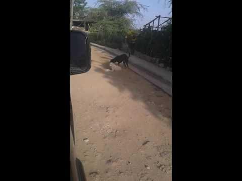 Los mojores Video -chiste-locos crazy risa subidos a wasap -2016