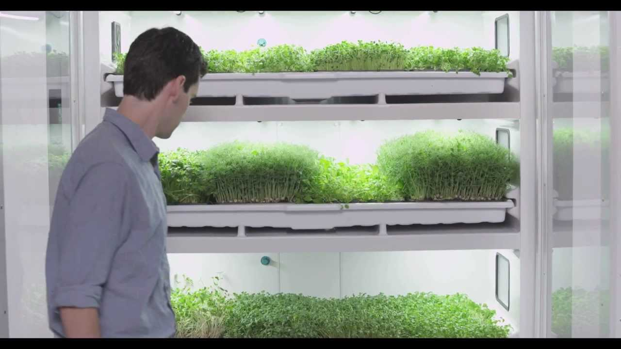 Chef Ned Bell Talks About The Commercial Cultivator - YouTube