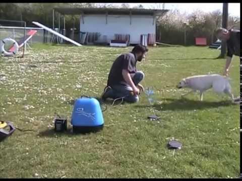 club canin a dole