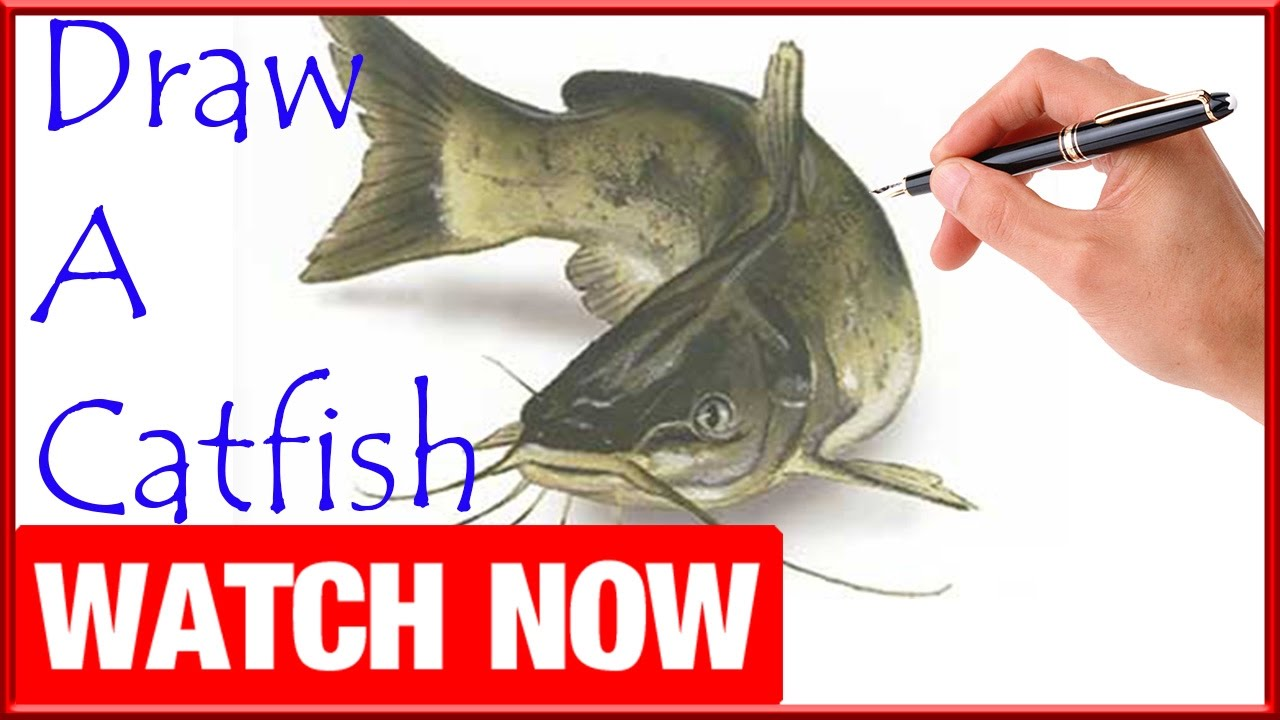 How To Draw A Catfish Learn To Draw Art Space Youtube