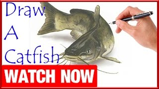 How To Draw A Catfish - Learn To Draw - Art Space