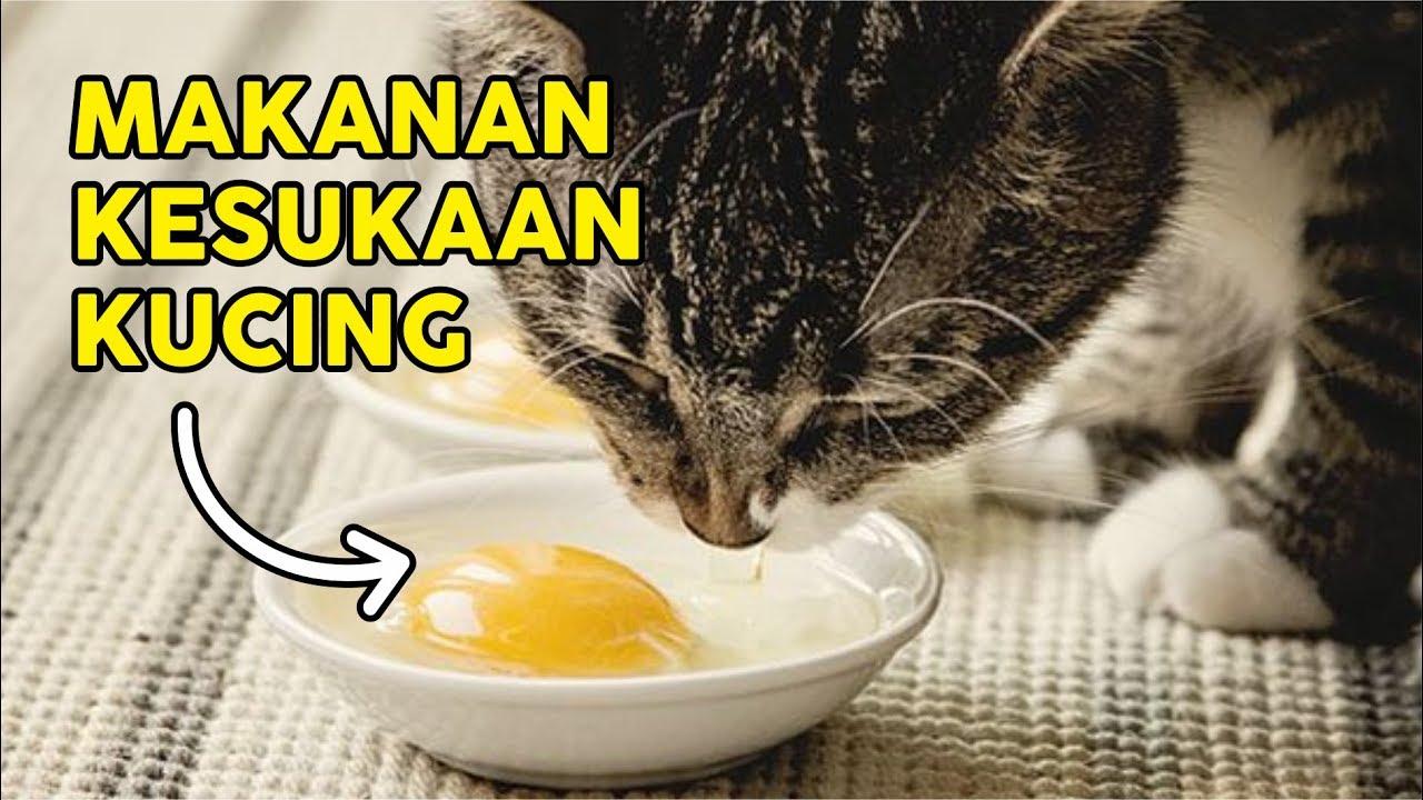 Cara Melebatkan Bulu Kucing Hanya Dengan Kuning Telur Begini
