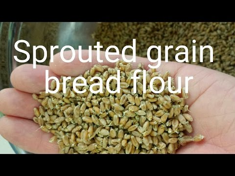 sprouted-grain-bread-flour-how-to-(-low-gluten-)