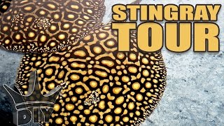 INSANE stingray aquarium tour!!!