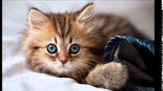 لمحبي القطط صور اجمل قطط في العالم صغيرة تجنن !!!