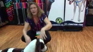 Freedom No-pull Harness How To Use Your Harness Brought To You By The Healthy Dog