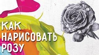 Как нарисовать розу? 10 основных ошибок при рисовании розы. Как нарисовать розу правильно.(Как нарисовать розу. Записывайтесь на мастер-классы по живописи http://paintingdec.foreven.ru/articles/7206?utm_source=YouTube&utm_medium=Vine..., 2016-02-05T06:00:47.000Z)