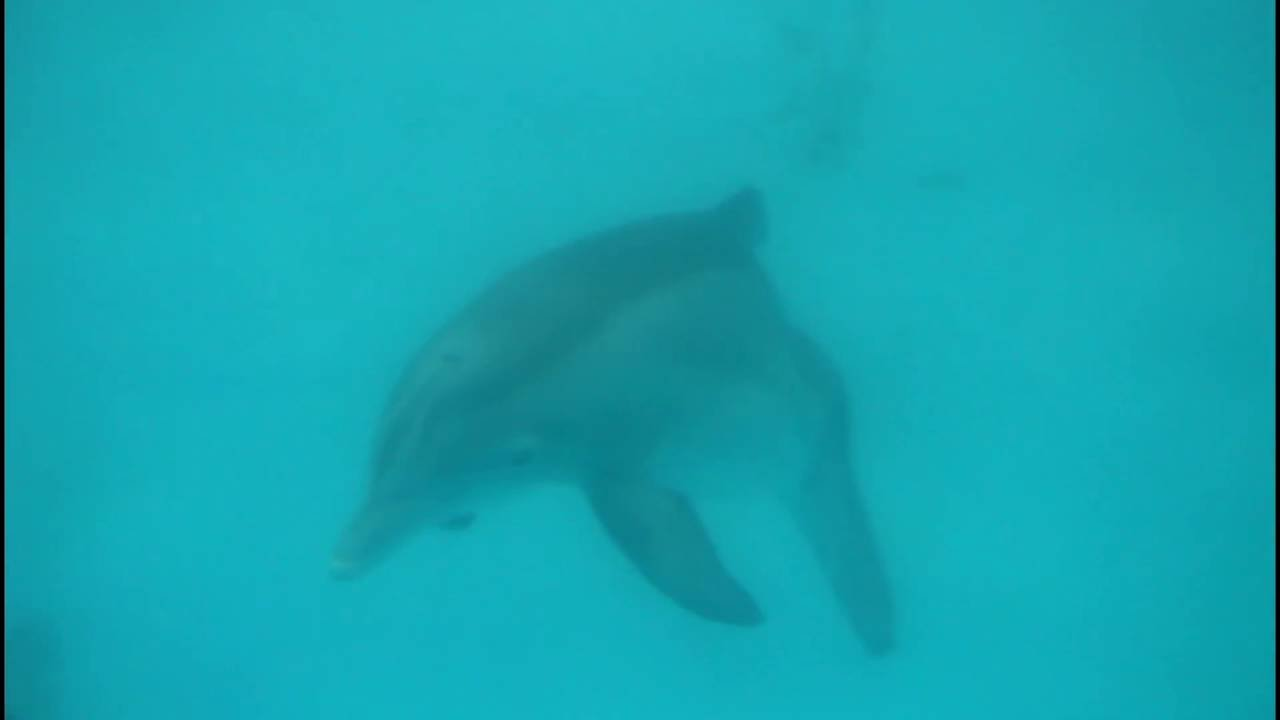 See WINTER the Dolphin and Hope @ The Clearwater Marine Aquarium ...