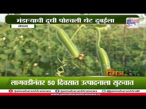 Shetimitra: Farmer success story of Bhandara Bottle gourd export to Dubai 170118
