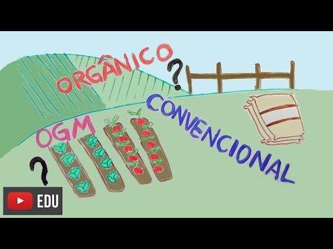 Orgânico, convencional ou OGM? | #InstanteBiotec 14
