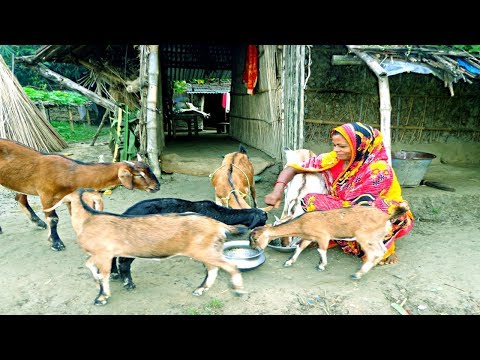 Starting a Business - Goat Farming Business Plan and Raising Goats Farm Ideas for Women in Home