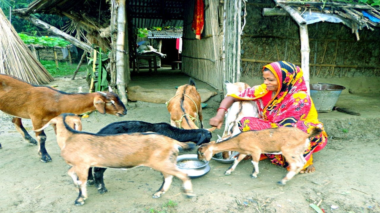 Goat Farming - How to Start a Business Raising Goats for Women in the Home