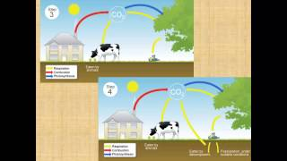 Carbon Cycle for iGCSE Biology
