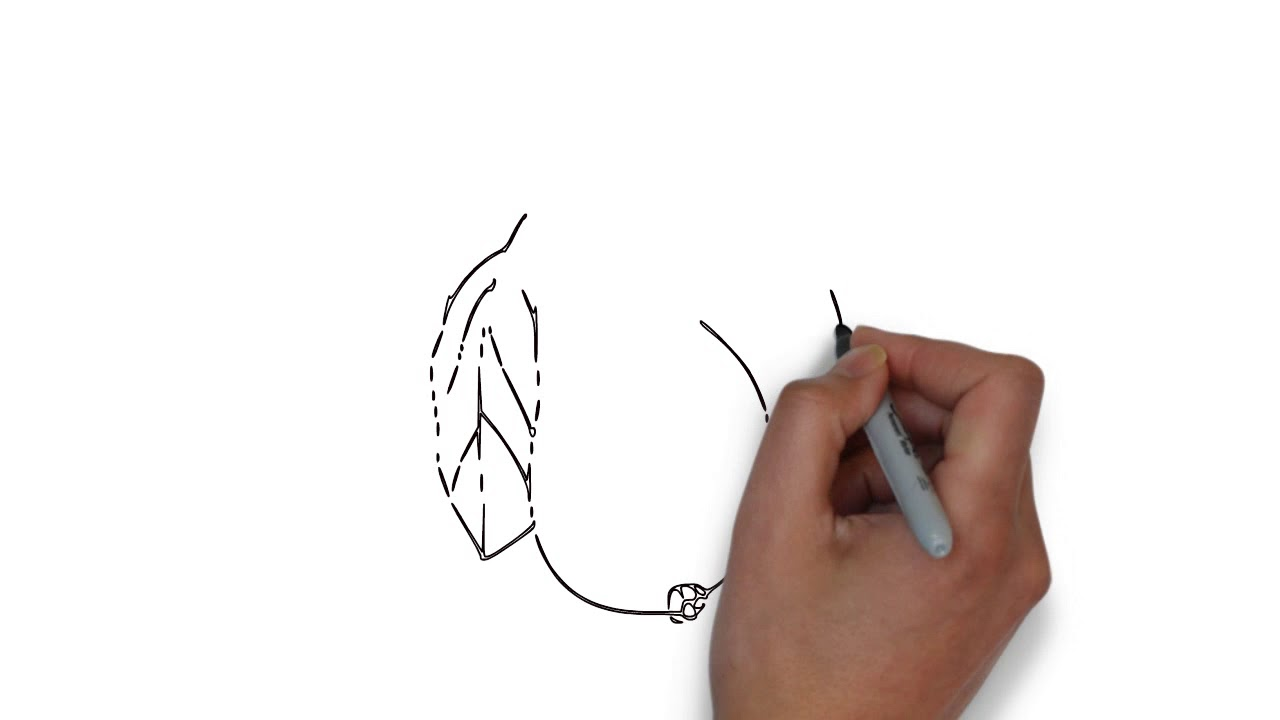 How to draw | Fruit | Guava | step by step (very easy)