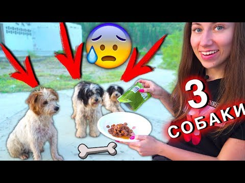 NOW THERE THREE DOGS on the Abandoned Spirit Island. Save from Hunger | Elli di pets