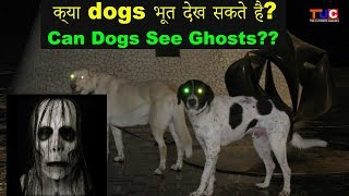 Can Dogs See Ghosts(Bhoot)?? : Know Your Dog : The Ultimate Channel